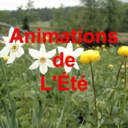ANIMATIONS ÉTÉ 2020